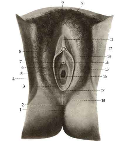 boli-analnogo-otverstiya