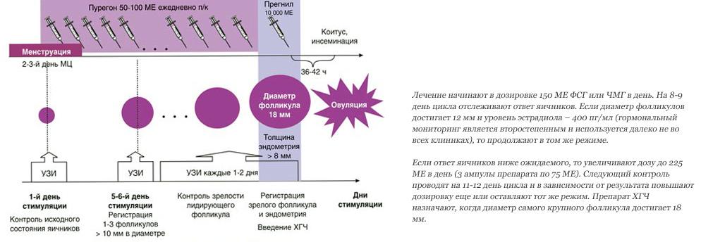 Стимуляция гоналом схема эко