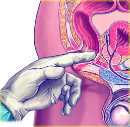 Асд фракция 2 применение для человека аденома простаты