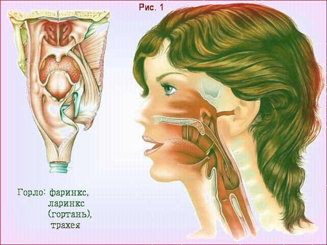 Фарингоэктомия