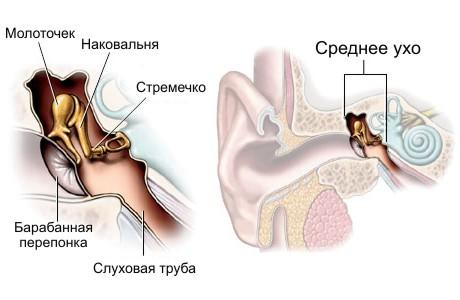 Так как особенности строения среднего уха детей предрасполагают к инфекционному процессу, то к 7 годам около 90...