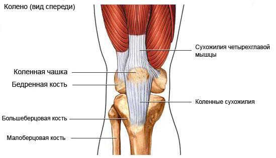 Болит колено при сгибе.не ударяла тофусы в области суставов