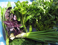 Наполните свой рацион свежей зеленью, это поможет улучшить эрекцию